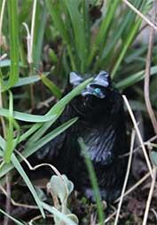 Schwarze Bärenfigur im Gras