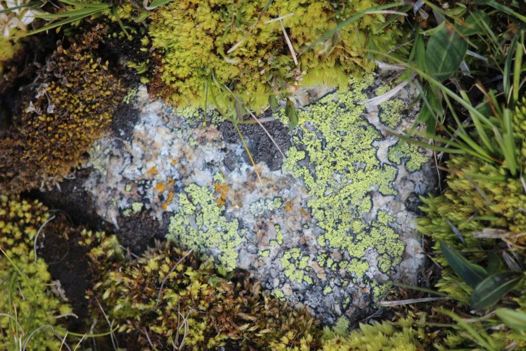 Stein mit Flechten und Moosen