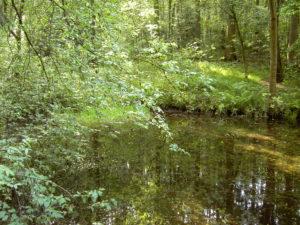 Waldweiher in dessen Wasseroberfläche sich die Bäume spiegeln