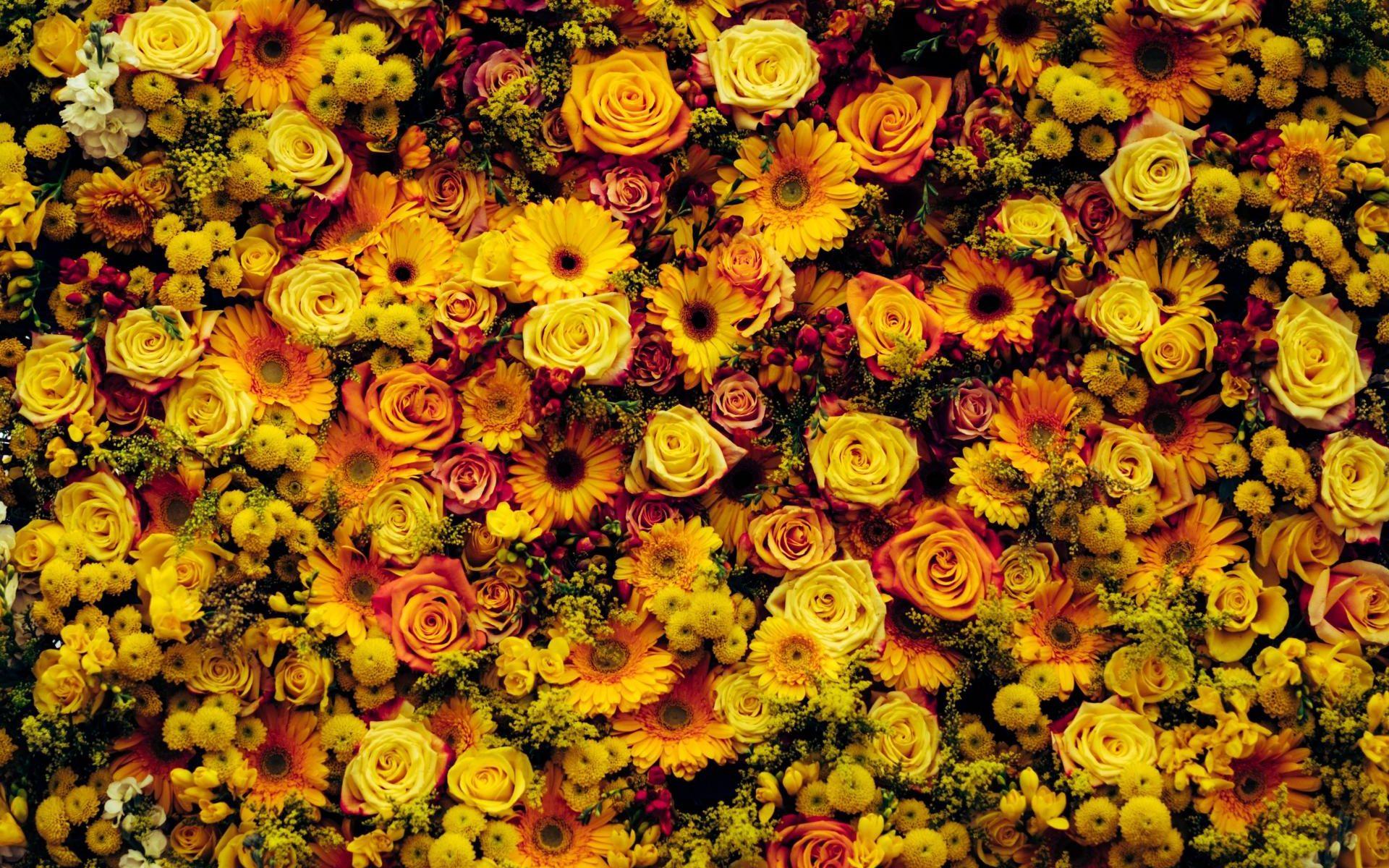 Ein orange farbenes und gelbes Blütenmeer