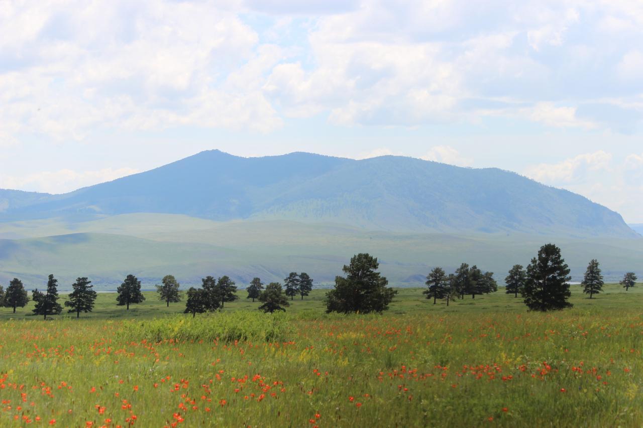 Wiese mit roten Blütentupfen, Laubbäumen und Gebirge