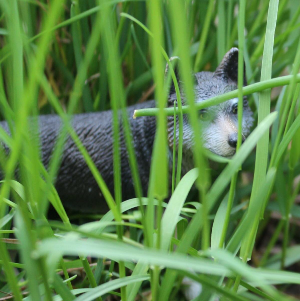 Wolf im hohen Gras